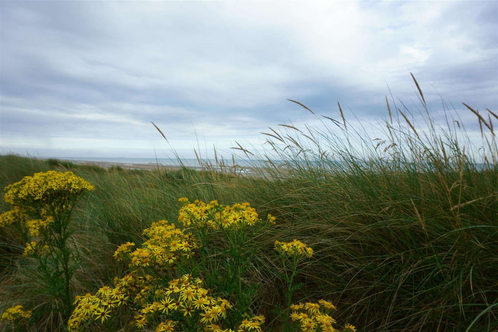Camber beach1