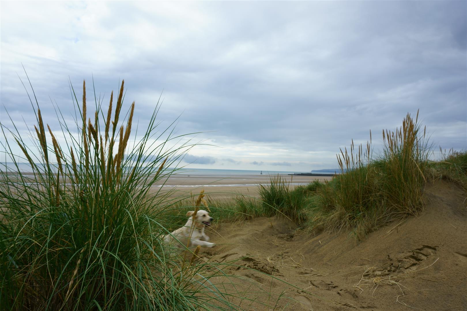 Camber beach4